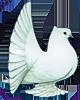 SV Indische Pfautauben Logo